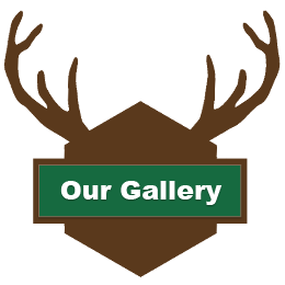 Our Gallery Button